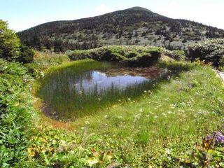 池塘2.JPG