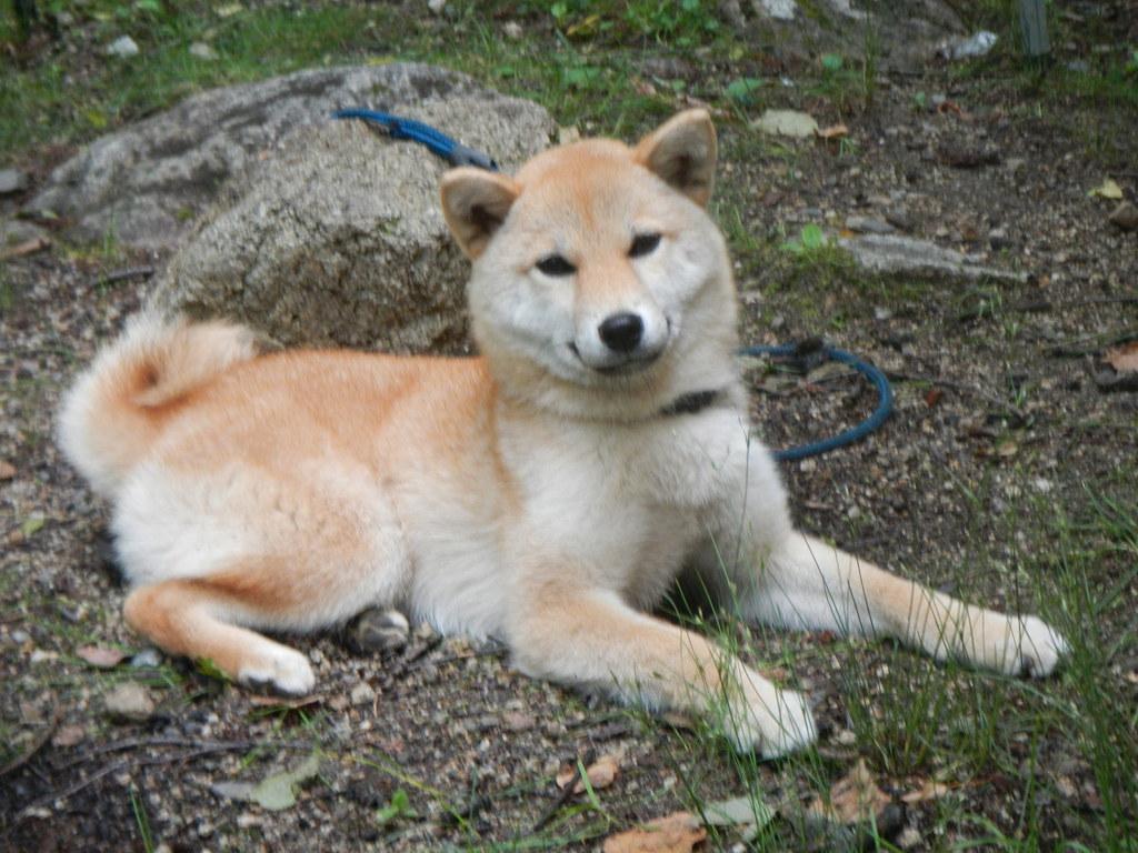 廻り目平BCのアイドル犬