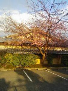 城ケ崎は春の兆し
