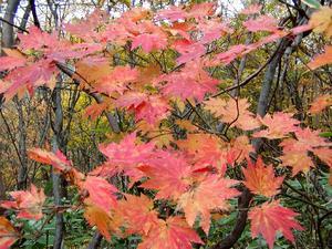 巻機山の秋