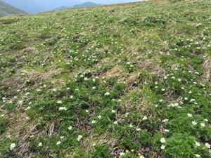 花の平標山